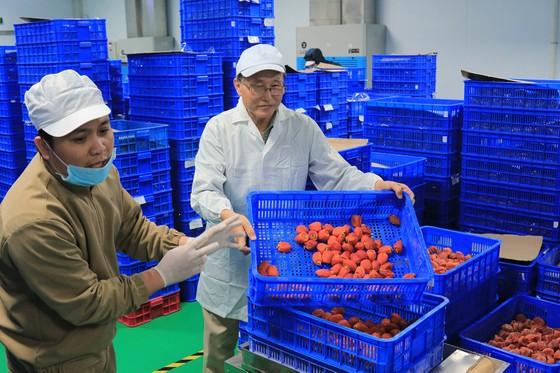 Sấy treo trái hồng Đà Lạt theo công nghệ Nhật Bản ảnh 11