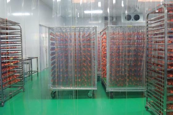 Sấy treo trái hồng Đà Lạt theo công nghệ Nhật Bản ảnh 8