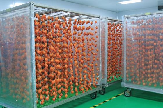 Sấy treo trái hồng Đà Lạt theo công nghệ Nhật Bản ảnh 7