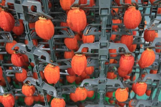 Sấy treo trái hồng Đà Lạt theo công nghệ Nhật Bản ảnh 9