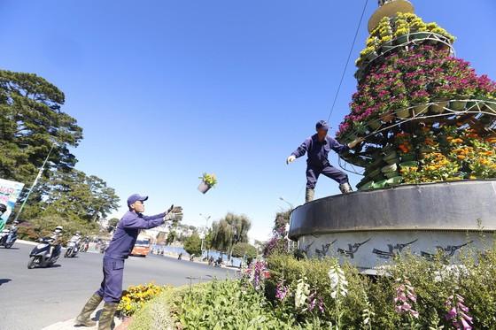 Tiểu cảnh hoa phục vụ Festival hoa Đà Lạt bị trộm  ảnh 4