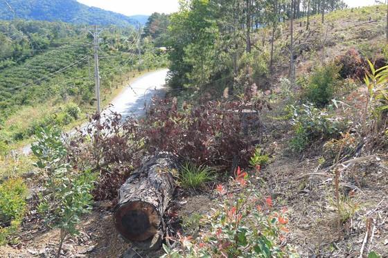 Lâm Đồng: Điều tra vụ phá rừng, lấn chiếm, mua bán đất lâm nghiệp trái phép ảnh 2