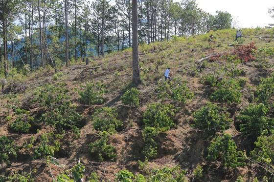 Lâm Đồng: Điều tra vụ phá rừng, lấn chiếm, mua bán đất lâm nghiệp trái phép ảnh 1