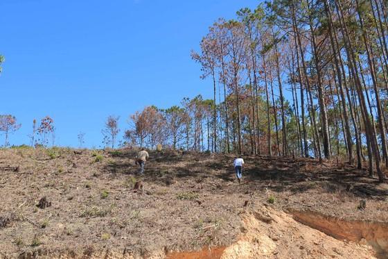Lâm Đồng: Điều tra vụ phá rừng, lấn chiếm, mua bán đất lâm nghiệp trái phép ảnh 5
