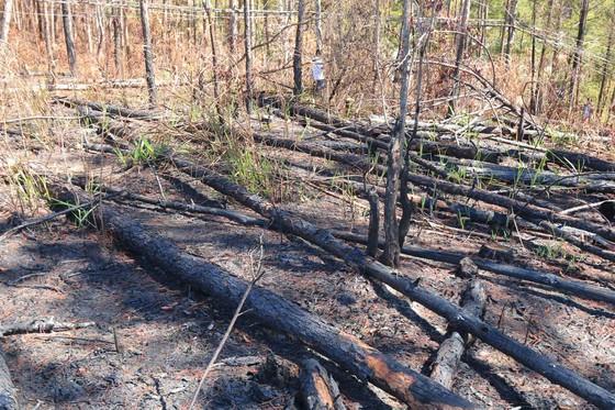 Lâm Đồng: Điều tra vụ phá rừng, lấn chiếm, mua bán đất lâm nghiệp trái phép ảnh 4