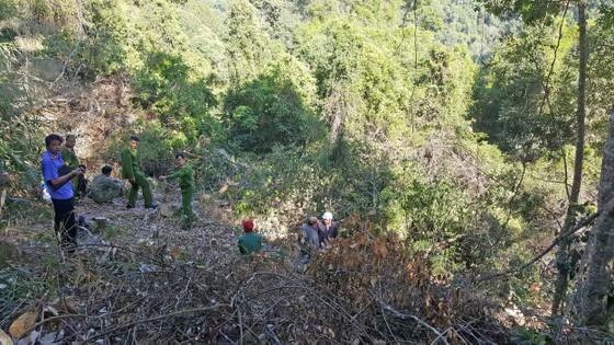Bắt quả tang 3 đối tượng phá rừng ở Đà Lạt ảnh 7