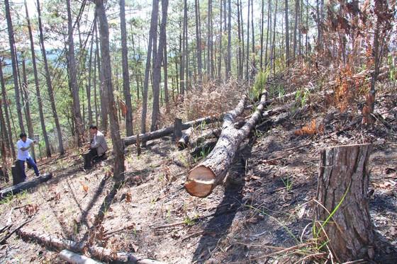 Lâm Đồng: Điều tra vụ phá rừng, lấn chiếm, mua bán đất lâm nghiệp trái phép ảnh 3