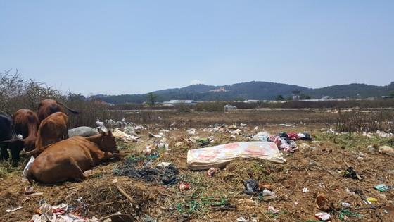 Sân bay Cam Ly (Đà Lạt) tràn ngập rác thải ảnh 5