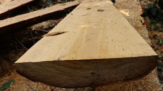 Rừng bạch tùng hơn trăm năm tuổi tại Lâm Hà, Lâm Đồng bị 'xẻ thịt' ảnh 10