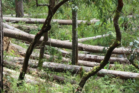 Thủ tướng chỉ đạo kiểm tra, xử lý tình trạng mất rừng tại Lâm Đồng  ảnh 1