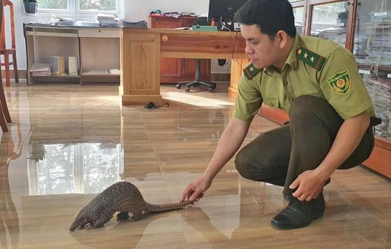 Dân mua thú hoang dã giao cho kiểm lâm thả về rừng ảnh 1