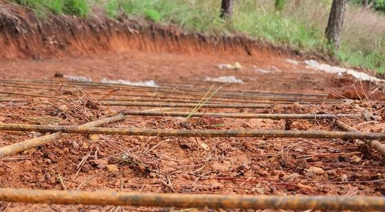 Ngang nhiên làm đường bê tông trong rừng thông Đà Lạt ảnh 3