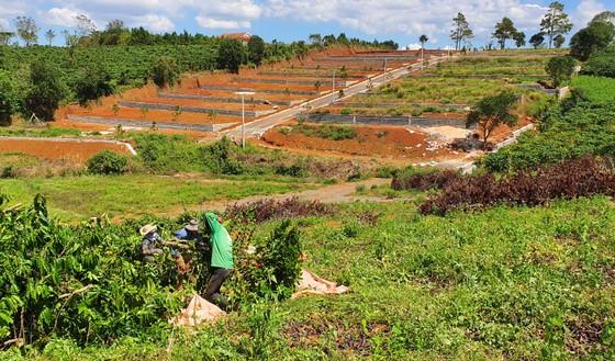Lâm Đồng xử lý nhiều cán bộ liên quan tách thửa, quản lý đất đai ảnh 2