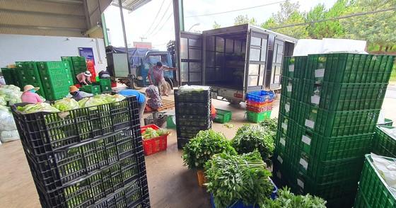 Mỗi ngày Lâm Đồng xuất 4.000 tấn rau, củ đi TPHCM ảnh 3