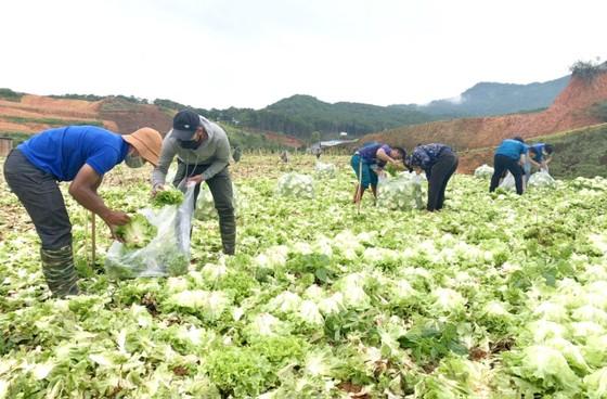 Thêm nhiều xe rau, củ từ Lâm Đồng hỗ trợ vùng dịch ở TPHCM và Phú Yên ảnh 2