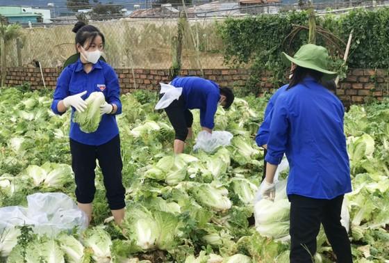 Thêm nhiều xe rau, củ từ Lâm Đồng hỗ trợ vùng dịch ở TPHCM và Phú Yên ảnh 3