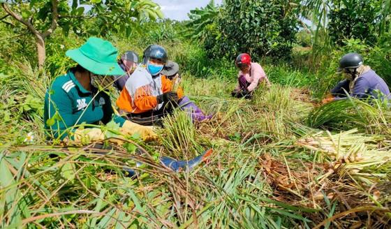 Thêm nhiều xe rau, củ từ Lâm Đồng hỗ trợ vùng dịch ở TPHCM và Phú Yên ảnh 5