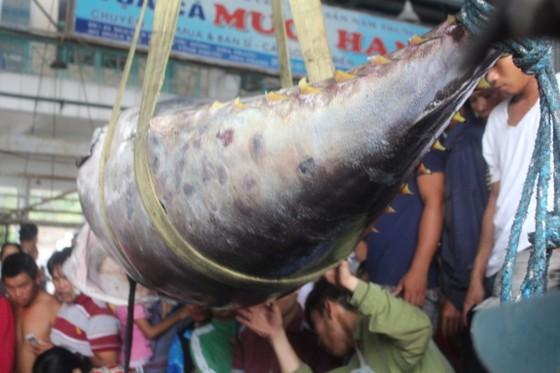 Cá ngừ đại dương được xác lập Kỷ lục Việt Nam ảnh 1