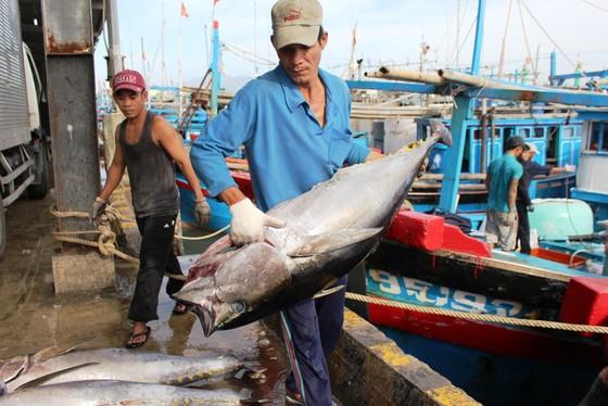 Số tàu tham gia khai thác cá ngừ theo chuỗi còn ít ảnh 1