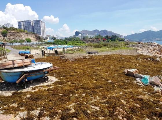 Khánh Hòa thu hồi dự án lấn biển để xây dựng Trung tâm biểu diễn nghệ thuật ảnh 1