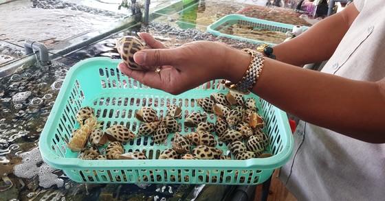Một nhà hàng hải sản tại Nha Trang bị phạt sau khi khách tố có hành vi chặt chém giá ảnh 1