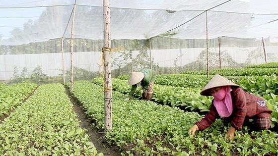 Bộ trưởng Bộ NN-PTNT đề nghị hỗ trợ 9.000 tỷ đồng tái cơ cấu nông nghiệp và khắc phục thiên tai ảnh 2