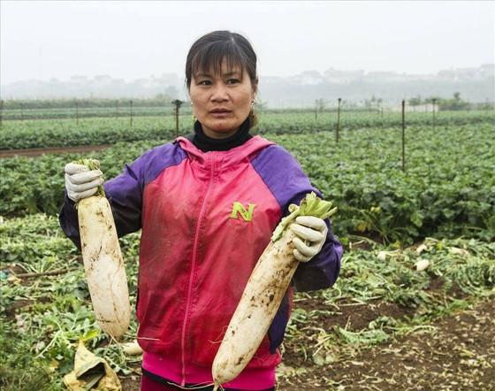 Cục trưởng Cục Trồng trọt báo cáo trồng rau lãi gần 300 triệu đồng/ha, số nhổ bỏ rất ít ảnh 1