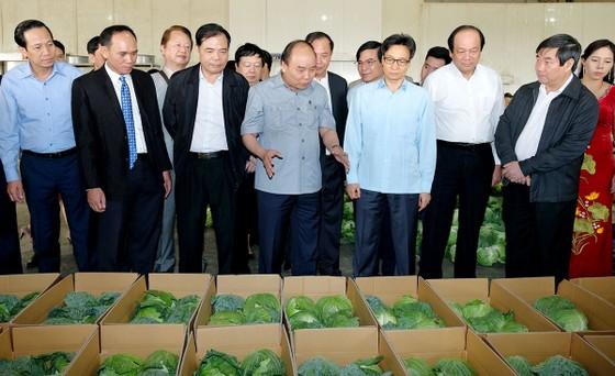 Thủ tướng Nguyễn Xuân Phúc: Trước khi gieo hạt nông dân phải biết tiêu thụ ở đâu ảnh 3