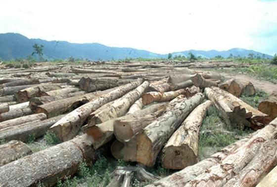 Cả nước còn 29 dự án thủy điện tương đương 900ha rừng chưa trồng thay thế ảnh 1