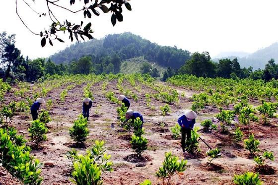 Thủ tướng quyết định dành hơn 28.000 tỷ đồng để bảo vệ rừng Tây Nguyên ảnh 1