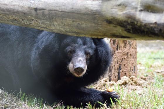 Maggie Q đến Việt Nam đặt tên cho gấu ảnh 3