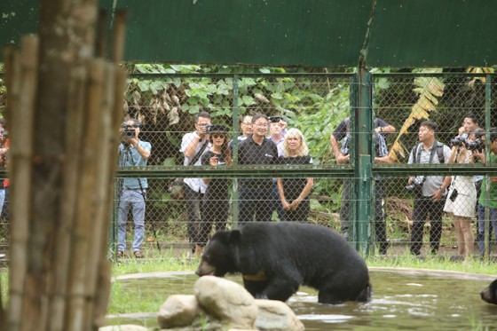 Maggie Q đến Việt Nam đặt tên cho gấu ảnh 1