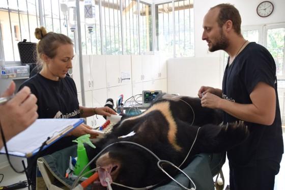 Maggie Q đến Việt Nam đặt tên cho gấu ảnh 4