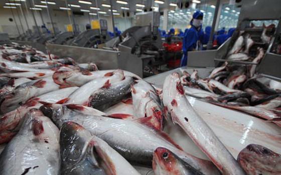 Mỹ công nhận tương đương hệ thống kiểm soát ATTP cá da trơn của Việt Nam ảnh 1
