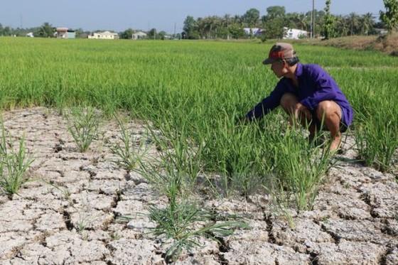 Đầu năm 2020: Việt Nam đối diện nguy cơ hạn hán nặng ảnh 1