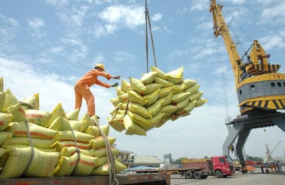 Điều tra các doanh nghiệp khai khống gạo để 'giữ chỗ' ảnh 1