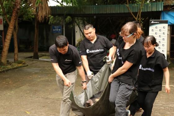 Cứu hộ 2 con gấu bị nuôi nhốt suốt 20 năm ảnh 6