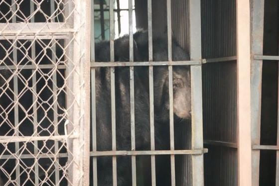 Cứu hộ 2 con gấu bị nuôi nhốt suốt 20 năm ảnh 1