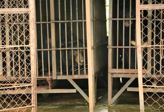 Cứu hộ 2 con gấu bị nuôi nhốt suốt 20 năm ảnh 2