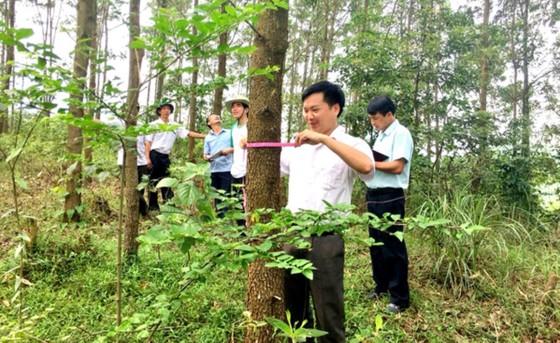 Việt Nam nhận 51,5 triệu USD để giảm phát thải khí nhà kính ảnh 2