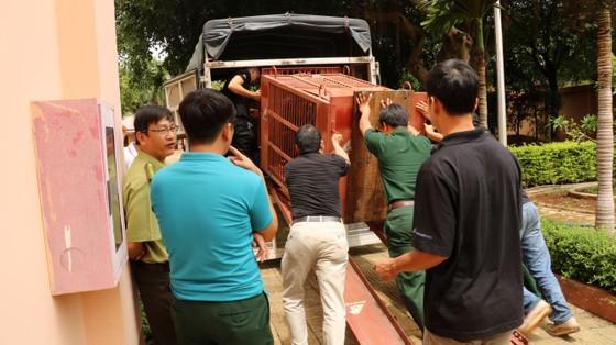 Đưa cá thể gấu nuôi nhốt cuối cùng ở tỉnh Gia Lai về Tam Đảo ảnh 3