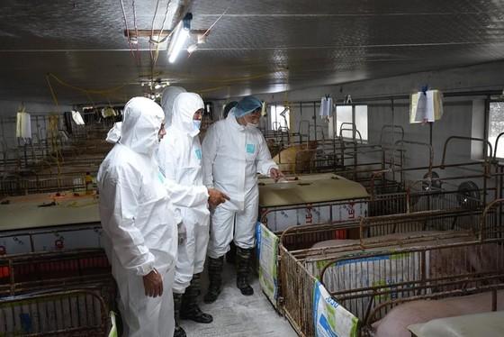 Thái Lan giảm xuất khẩu thịt heo sang Việt Nam  ảnh 3