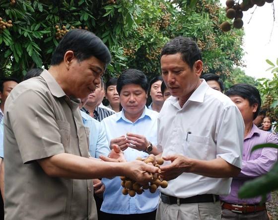 Gỡ khó để trái nhãn của Việt Nam dễ dàng xuất khẩu ảnh 2
