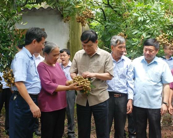 Gỡ khó để trái nhãn của Việt Nam dễ dàng xuất khẩu ảnh 3