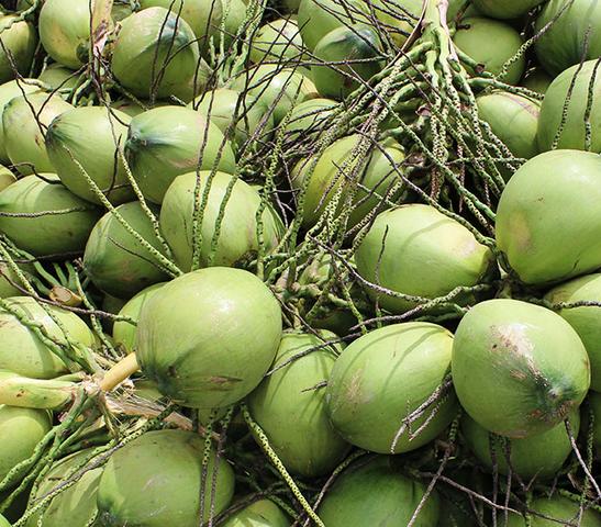 """Giá trái cây rẻ """"giật mình"""": dừa xiêm 60.000 đồng/chục, nhãn lồng 7.000-8.000 đồng/kg ảnh 1"""
