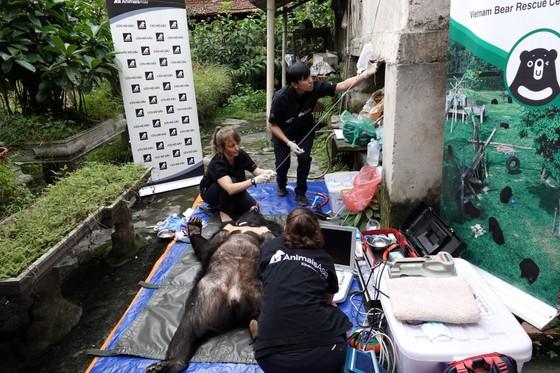 Cứu hộ 1 cặp gấu mẹ - con được nuôi sinh sản ở Việt Nam ảnh 3