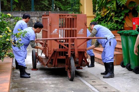 Cứu hộ 1 cặp gấu mẹ - con được nuôi sinh sản ở Việt Nam ảnh 4