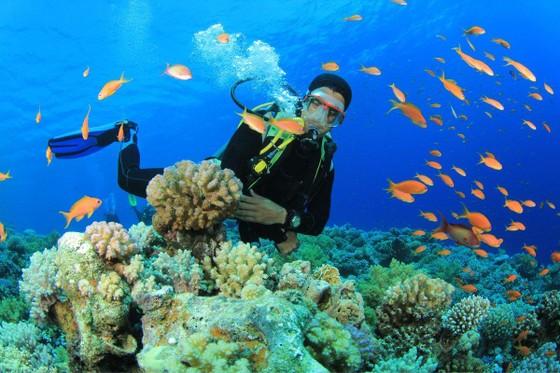 Tăng thêm diện tích khu bảo tồn biển Việt Nam ảnh 1