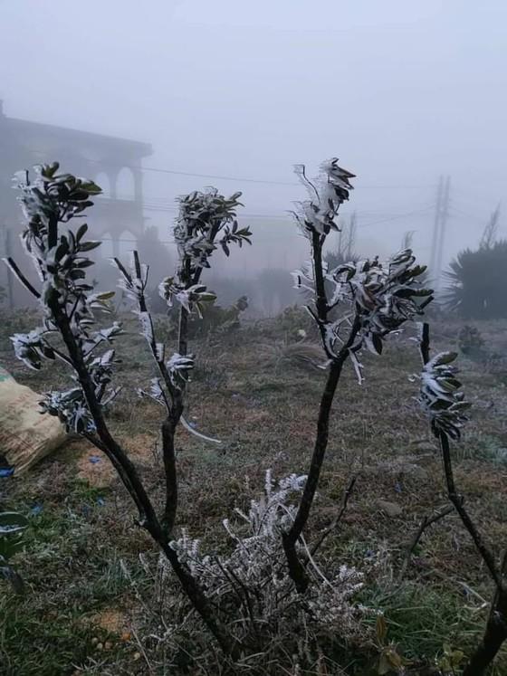Hà Nội còn 8 độ C, Mẫu Sơn chìm trong băng tuyết ảnh 9