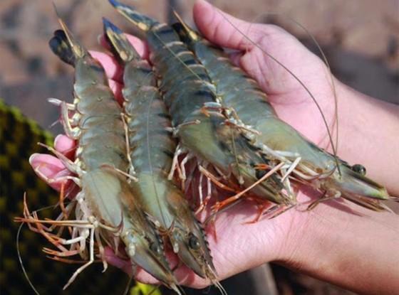 Người nuôi thuỷ hải sản đang gặp nhiều khó khăn ảnh 1